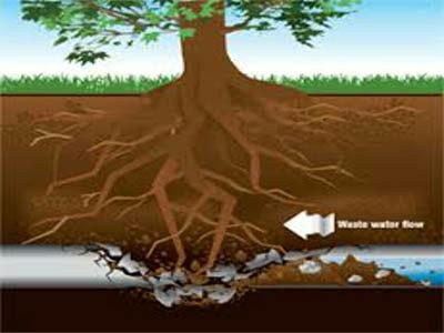 Canalisation égout bouchée par des racines